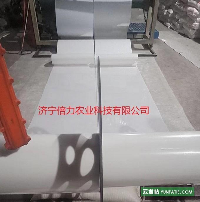 鸽舍自动PP传送带自动清粪带PP材质乳白颜色