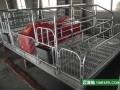 河北良诸各种母猪产床生产厂家
