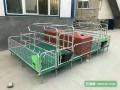 全复合保育床母猪产床价格尺寸